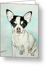 Chihuahua White With Black Spots Greeting Card