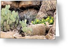 Chihuahuan  Desert Cacti Greeting Card