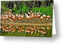 Chilean Flamingo Reflection In San Diego Zoo Safari Park In Escondido-california Greeting Card