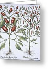 Chilli Pepper Plants Greeting Card