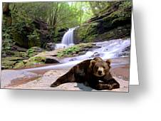 Chillin Bear Greeting Card by Bob Jackson