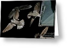 Chimney Swifts Greeting Card