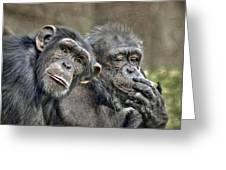Chimp Couple Greeting Card