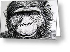 Chimp Greeting Card