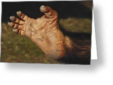Chimpanzee Foot Greeting Card