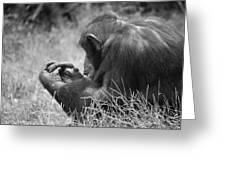Chimpanzee In Thought Greeting Card