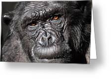 Chimpanzee Portrait Greeting Card