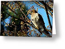 China Berry Hawk Greeting Card
