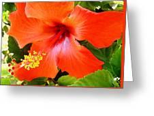 China Camp Hibiscus Greeting Card