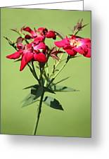 China Rose Greeting Card