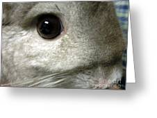 Chinchilla Face Greeting Card