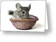 Chinchilla In A Straw Basket  Greeting Card