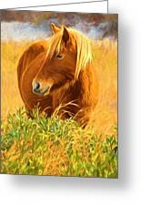 Chincoteague Pony Profile Greeting Card