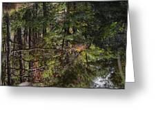 Chincoteague Reflection Greeting Card
