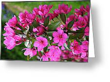 Chinese Apple Blossoms Greeting Card