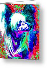 Chinese Crested Dog 20130125v3 Greeting Card by Wingsdomain Art and Photography