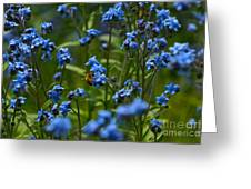 Chinese Forget Me Nots And Honey Bee Greeting Card
