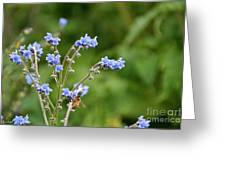 Chinese Forget Me Nots Greeting Card