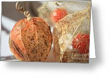 Chinese Lantern Plant - D Greeting Card