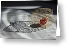 Chinese Lantern Plant - B Greeting Card