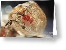 Chinese Lantern Plant - H Greeting Card