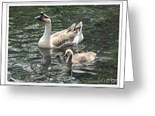 Chinese Swan Goose And Gosling Greeting Card