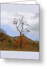 Chino Hills Tree Greeting Card