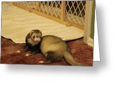 Chinook The Ferret Greeting Card