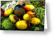Chinquapin Harvest Greeting Card