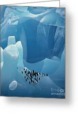 Chinstrap Penguins On Blue Iceberg Greeting Card