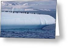 Chinstrap Penguins On Iceberg Greeting Card