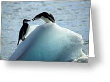 Chinstrap Penguins On Iceberg Greeting Card