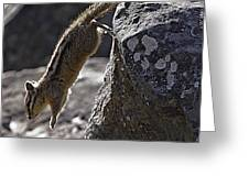 Chipmunk   #2155 Greeting Card