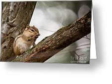 Chipmunk Bath Greeting Card