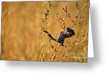 Chipmunk Cheeks Greeting Card