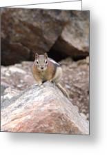 Chipmunk Gaze Greeting Card