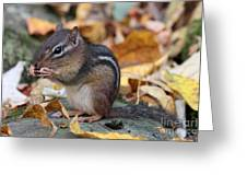 Chipmunk Hungry Greeting Card