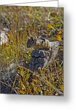 Chipmunk In Yellowstone Greeting Card