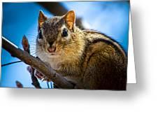 Chipmunk On A Branch Greeting Card