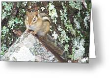 Chipmunk On A Log Greeting Card