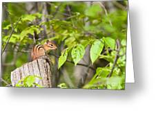 Chipmunk Shares Fence Post Greeting Card