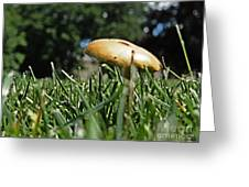 Chipmunks View Of A Mushroom Greeting Card