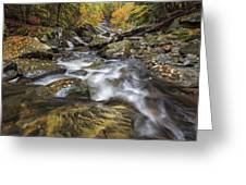 Chippewa Creek In Fall Greeting Card