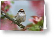 Chipping Sparrow In Blossoms Greeting Card by Deborah Benoit