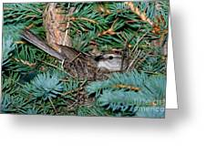 Chipping Sparrow On Nest Greeting Card