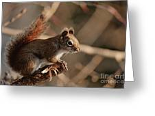 Chippy Perched Greeting Card