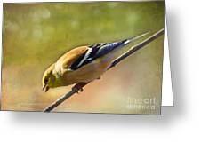 Chirping Gold Finch - Painted Effect Greeting Card