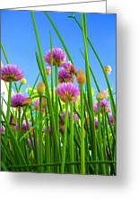 Chive Flowers And Buds Greeting Card by Jo Ann