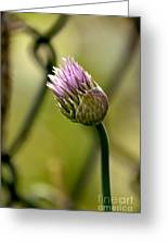 Chive In Bloom Greeting Card