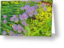 Chives 3 Greeting Card